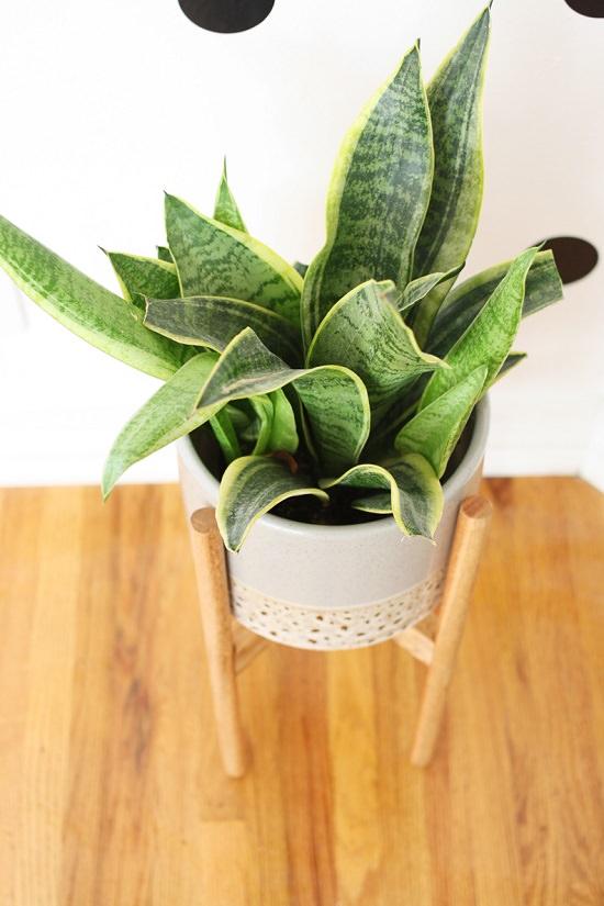 DIY Wood Plant Stand 4