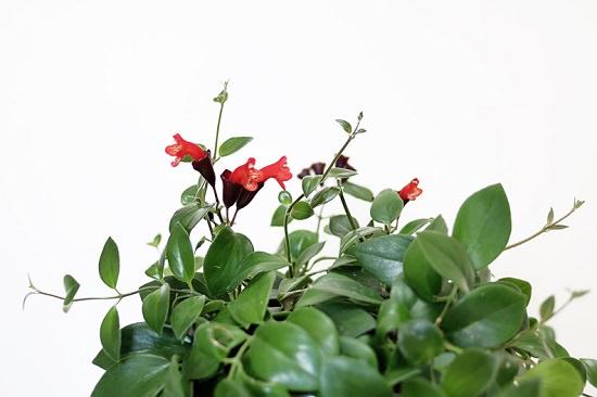 The Plant Series Lipsick Plant Hello Lidy