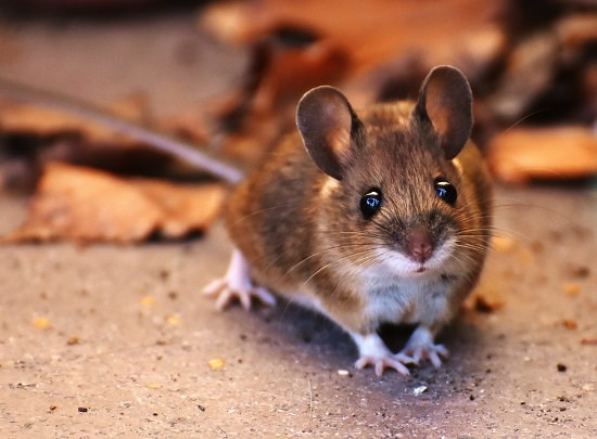 How to Use Tea Bags to Get Rid of Mice1