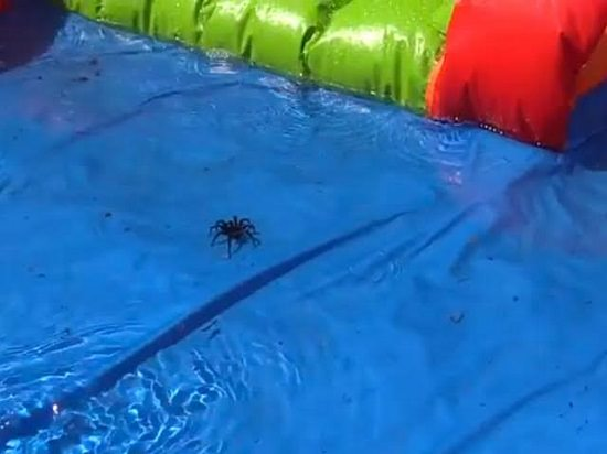 Spider In The Pool