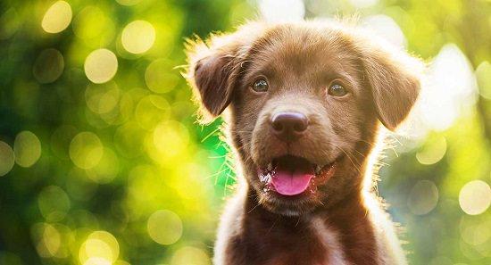 Is Castor Oil Safe for Dogs2