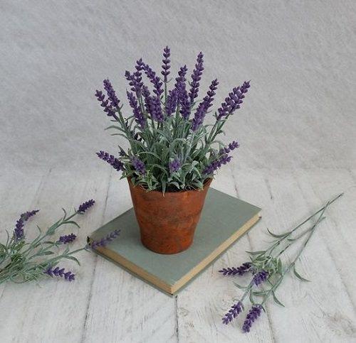 Do Lavender Repel Roaches2