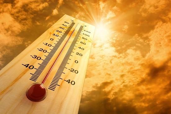 What Temperature Kills Fleas 2