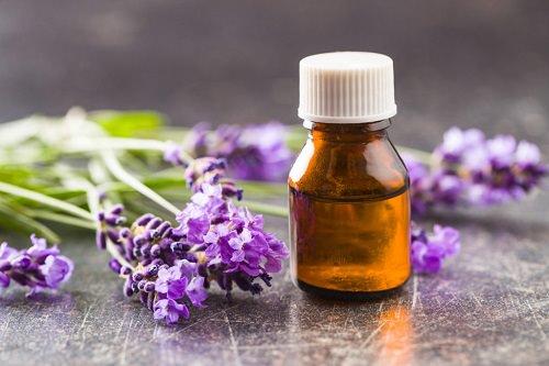 Do Lavender Repel Roaches3