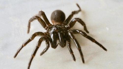 Does Hairspray Kill Spiders1