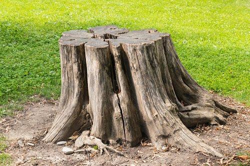 Killing Tree Stumps With Diesel1