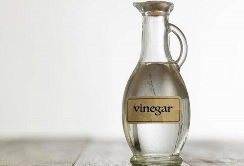 Vinegar For Spiders