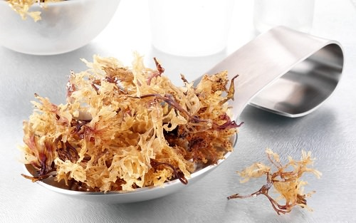Sea Moss Benefits for Hair1
