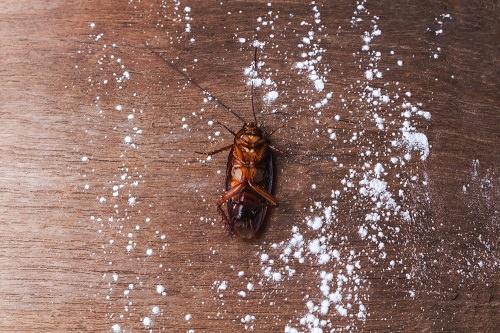 To Kill Roaches