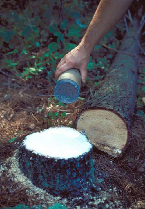 Kill Tree Stumps