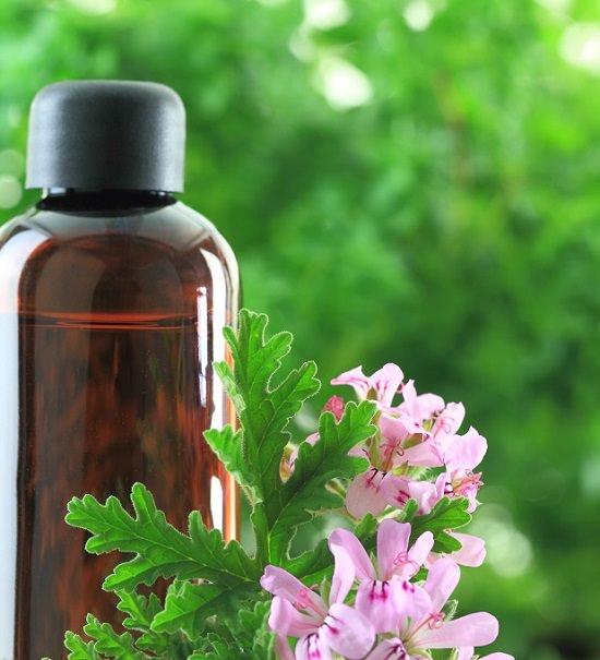 Rose Geranium Oil For Ticks 1