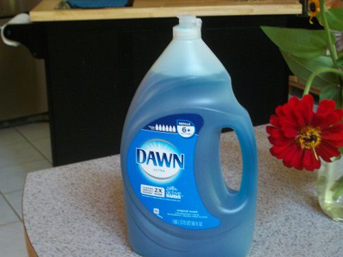 How To Kill Fire Ants With Dawn Dish Soap2