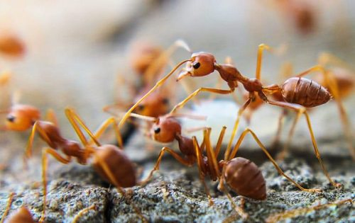 How To Kill Fire Ants With Dawn Dish Soap1