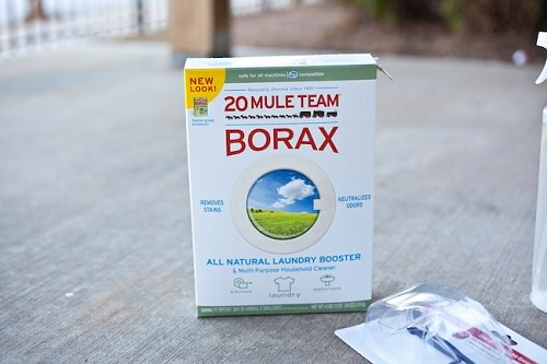 How to Get Rid of Ants With Borax1
