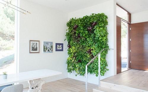 How to Make Living Wall Art1