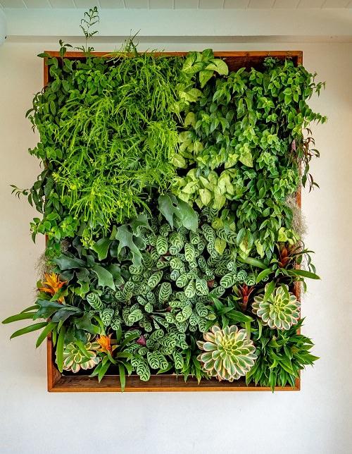 How to Make Living Wall Art2
