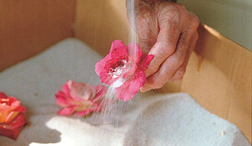 How to Preserve Flowers With Borax2
