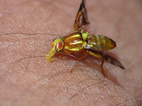 Essential Oils That Repel Biting Flies1