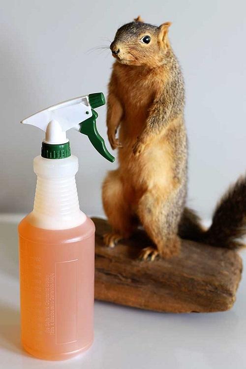 Homemade Squirrel Repellent Spray Recipes2