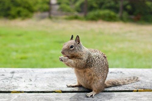 Homemade Squirrel Repellent Spray Recipes1