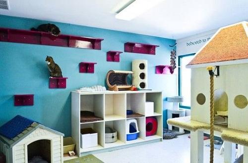 A Group Cat Room Design