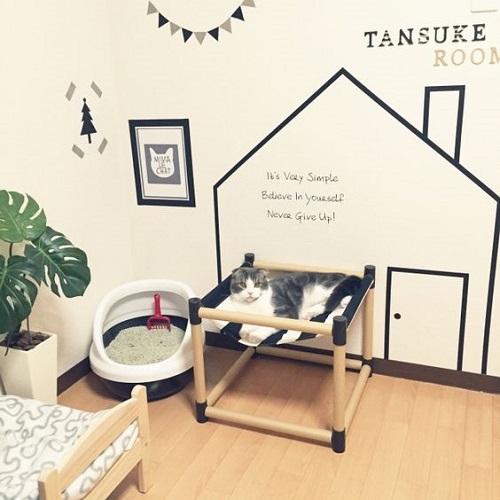 A Simple Feline Room