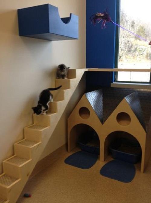 Cat Room Designs5