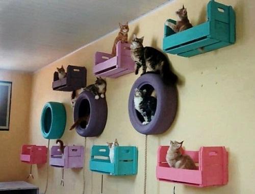 Cat Room Designs6