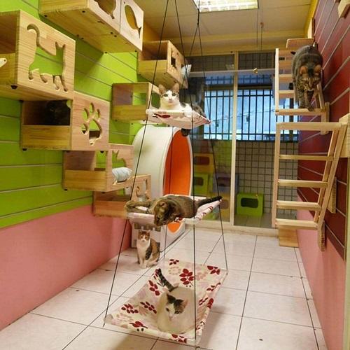 Cat Room Designs4