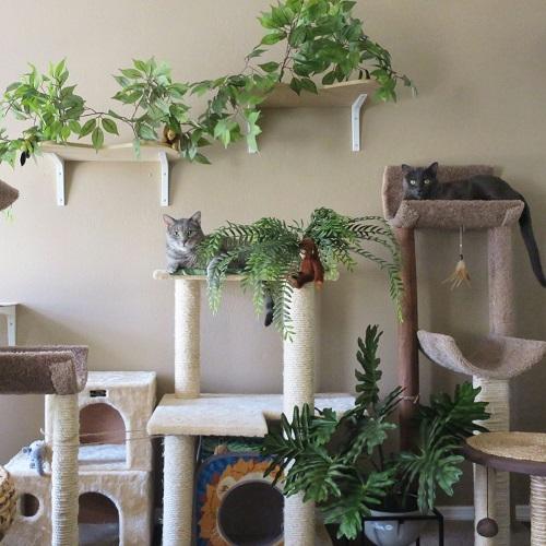 Jungle-themed Cat Playroom