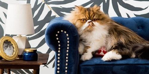 Cat Room Designs1