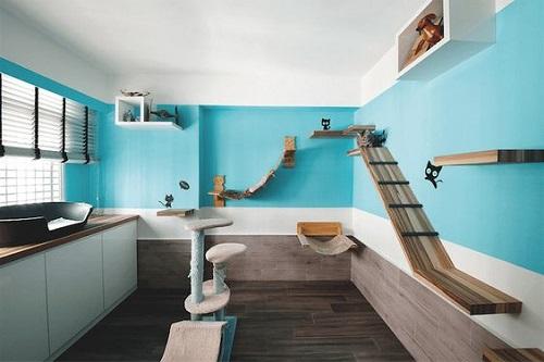Cat Room Designs7
