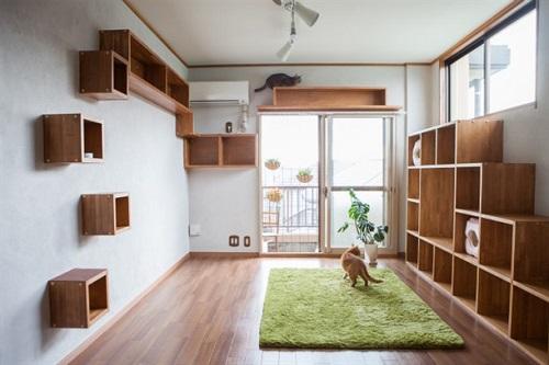 Shelves Shelves And Shelves!
