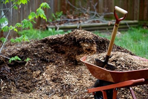 Easiest Way to Clean up Stump Grinding2