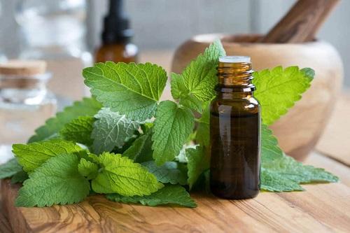 Does White Vinegar Kill Bed Bugs3