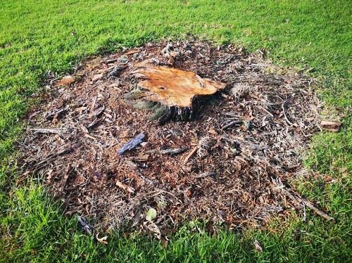 Easiest Way to Clean up Stump Grinding1