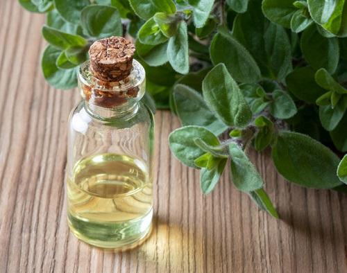 Wild Oregano Oil Benefits1