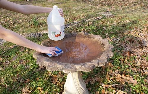 Clean a Dirty Birdbath