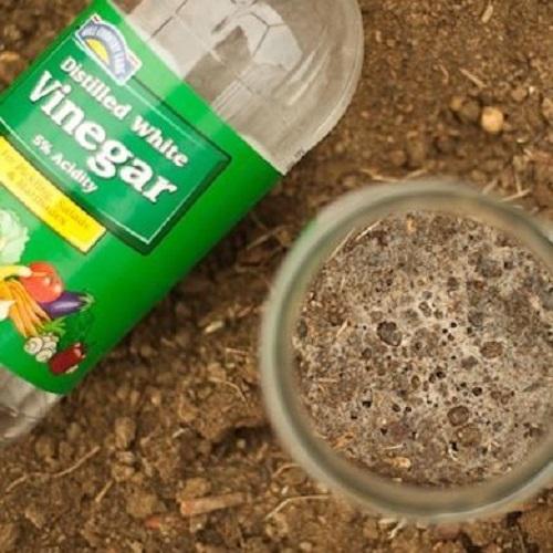 Test Soil Alkalinity