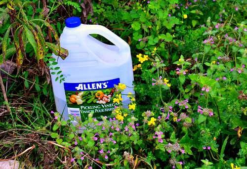 Vinegar Uses in the Garden1