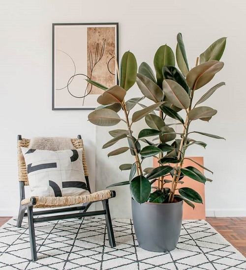 Indoor Plants to Get Rid Of Mold2