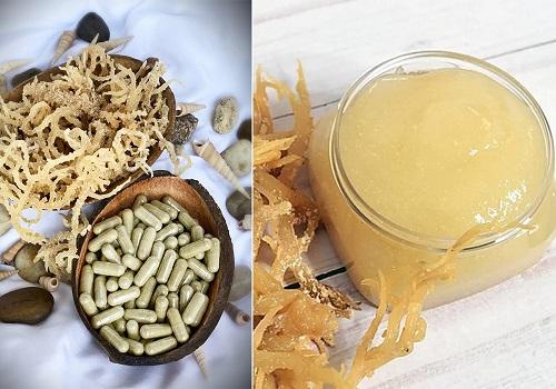 Sea Moss Pills vs Gel1